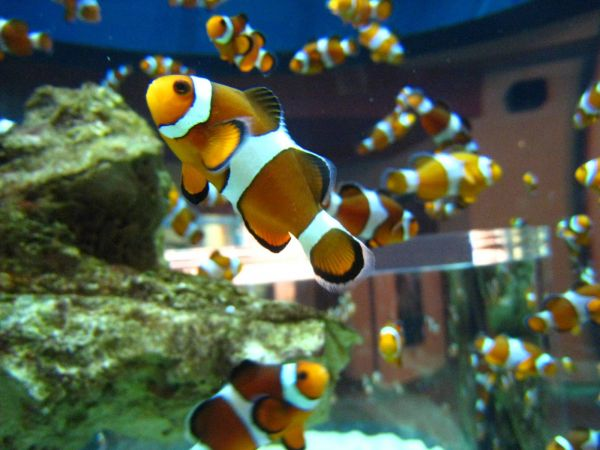 IMG_4677-cape-town-two-oceans-aquarium.JPG