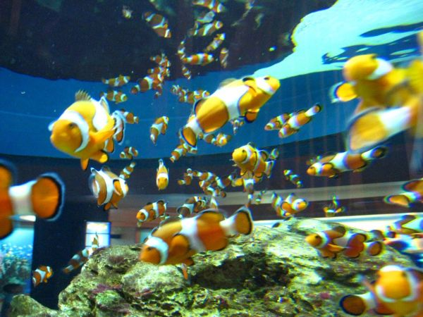 IMG_4681-cape-town-two-oceans-aquarium.JPG