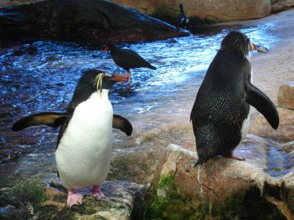 IMG_4728-cape-town-two-oceans-aquarium.JPG