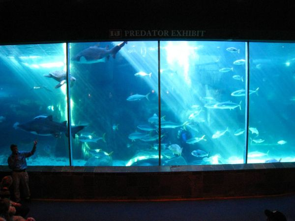 IMG_4735-cape-town-two-oceans-aquarium.JPG