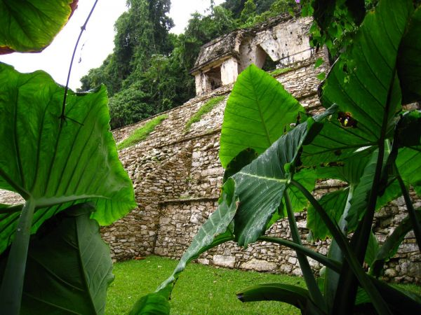 IMG_4425_palenque.JPG